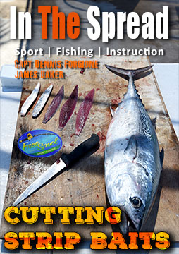 bait rigging cutting strip baits in the spread fishing video